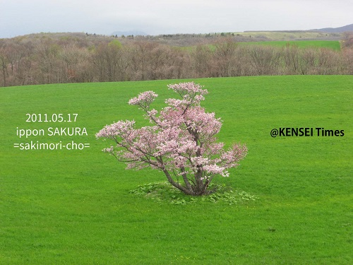 桜の開花予想♪