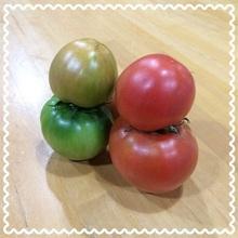 ふしぎなトマト!